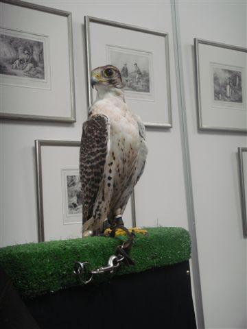 JF05 kutschenvogel